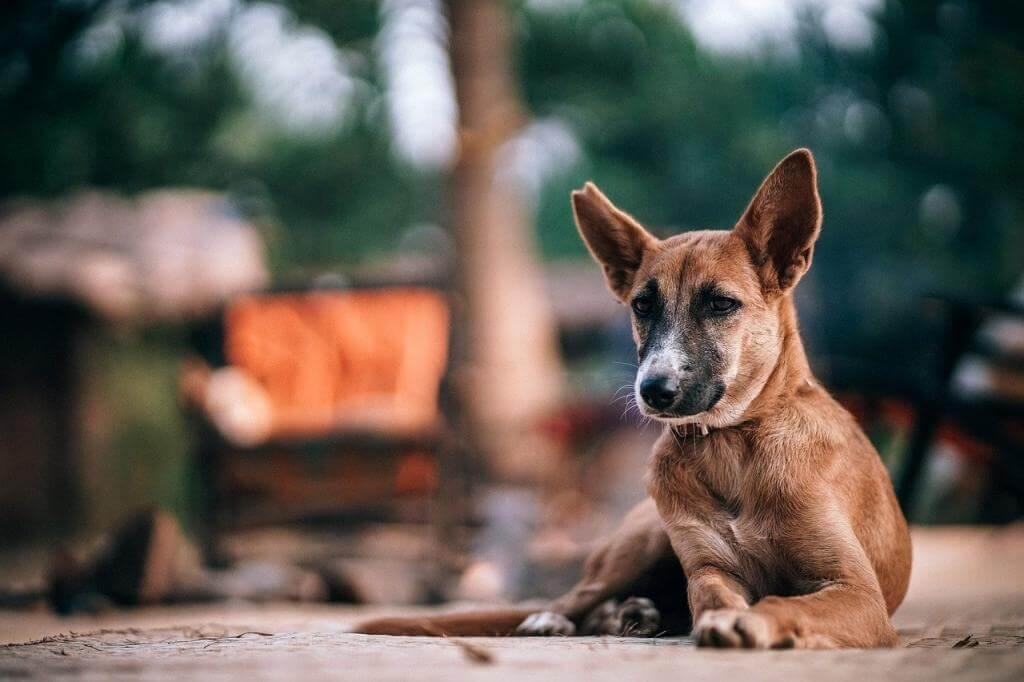 Odchyt túlavých psov v praxi